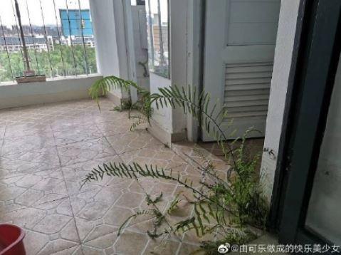 中國網友分享的宿舍長草圖。(圖擷取自微博)