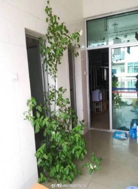 中國網友分享的宿舍長草圖。地點在男生寢室。(圖擷取自微博)