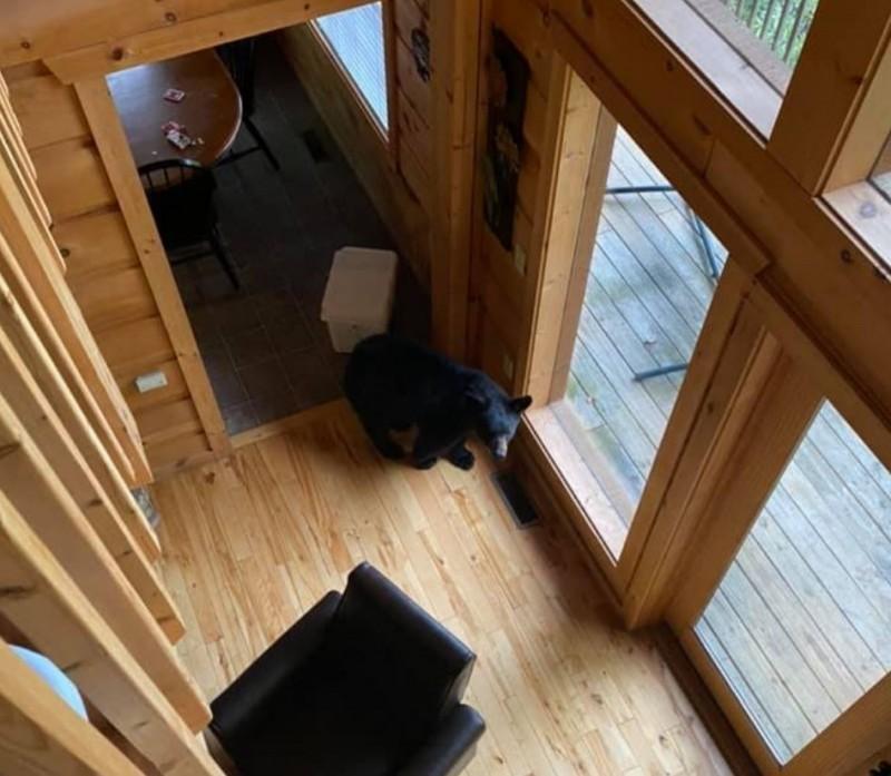 美國1隻黑熊闖入度假屋洗劫食物,另外還有3隻黑熊在門外把風。(圖擷自Michelle Eberhart, Sevierville, Pigeon Forge, Gatlinburg Eats and Attractions臉書)