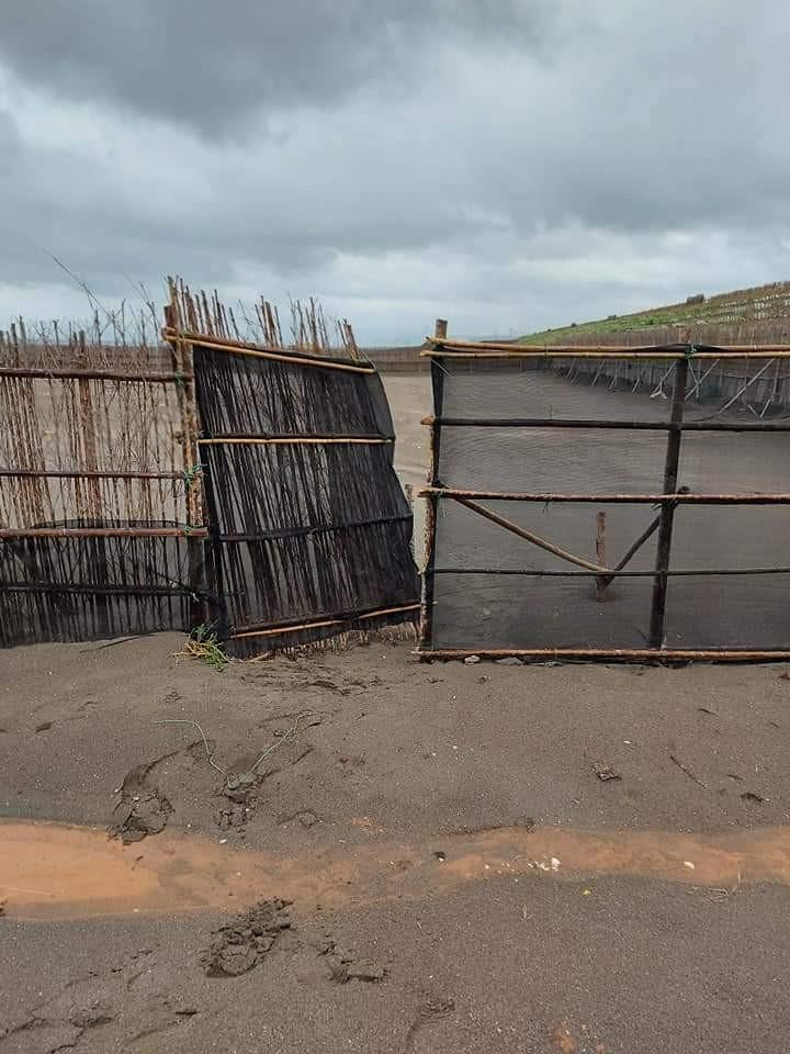 竹圍漁港小燕鷗育雛區設置有圍籬及禁止進入告示,18日中午卻有民眾擅自開啟闖入。(取自桃園市野鳥學會臉書)
