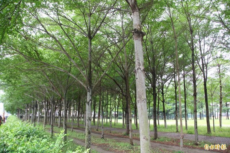 嘉義縣水上鄉空氣品質淨化區,種植900多棵樹。(記者林宜樟攝)