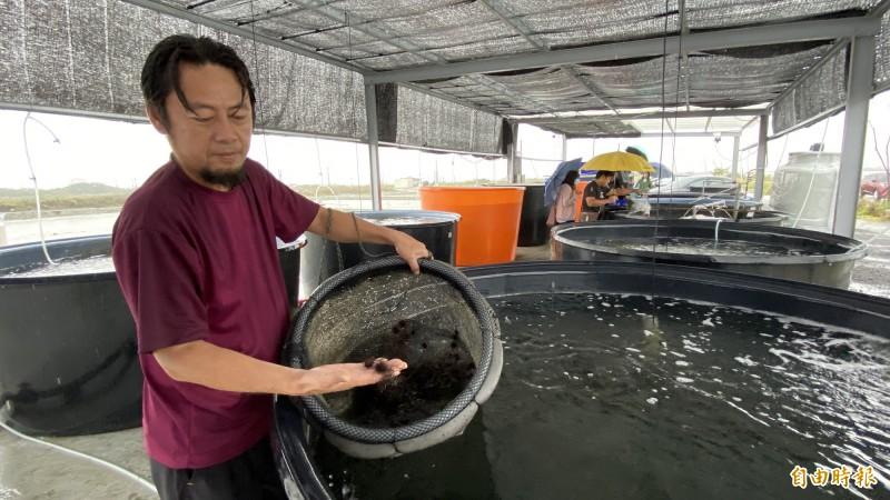 黃國良利用水冷養殖設備,連紫海膽也嘗試養殖,目前生長情形不錯。(記者楊金城攝)