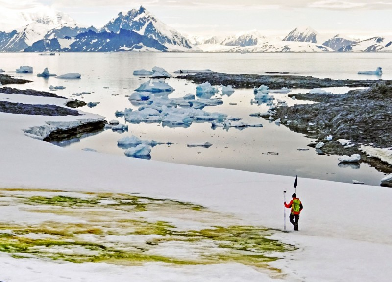 英國劍橋大學20日發布2018年在南極洲安克里奇島拍攝的雪地「綠化」照。(法新社)