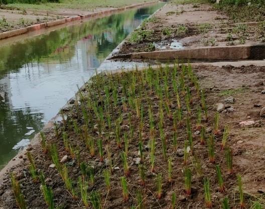 新北市政府水利局整治板橋區湳仔溝,將增加渠道仔溝兩側的綠化保水面積。(新北市政府水利局提供)