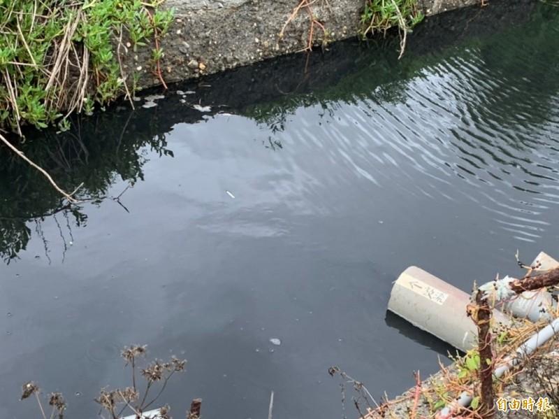 養豬場廢水排放口水色濃黑,散發臭味。(記者林國賢攝)