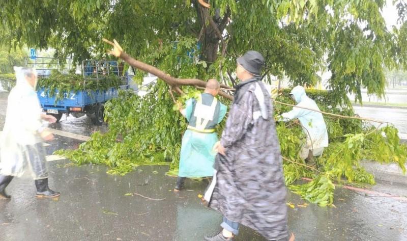 工程人員冒雨清除倒塌路樹。(建設局提供)