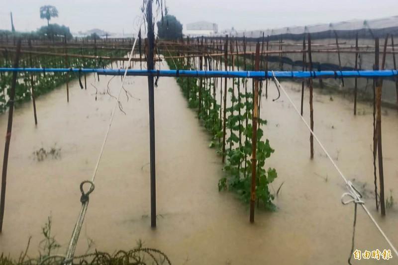 屏東縣連日被大雨襲擊,不少農作物被泡在水裡,紛紛傳出災情。(記者邱芷柔攝)
