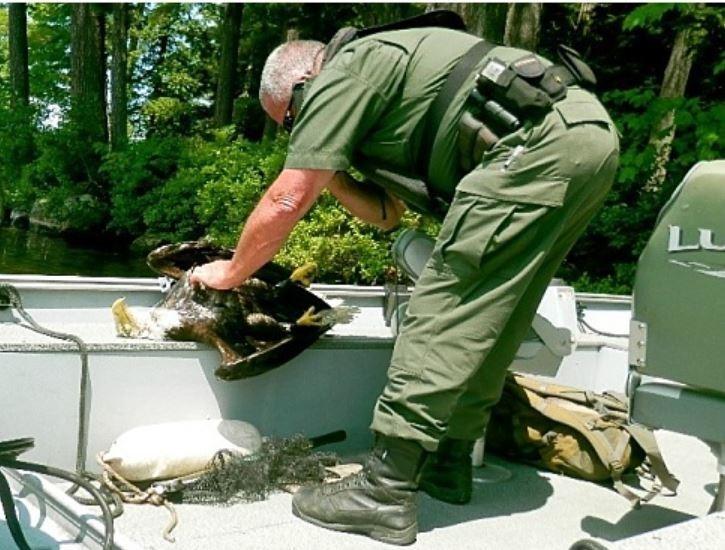 野生動物人員檢查白頭海鵰的遺體。(圖擷自Maine Department of Inland Fisheries & Wildlife官網)