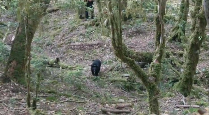 台東林管處臉書貼出廣原小熊活動畫面。(記者黃明堂翻攝)