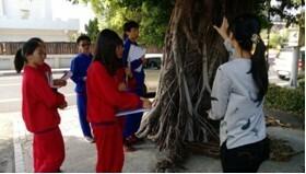 北斗國中以「種對樹,行人走好路」為研究發想,檢視家鄉北斗鎮行道樹的種植情況。(圖縣府提供)