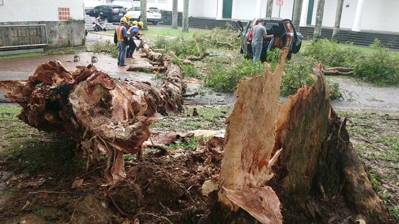 超心痛!5層樓高大樹雨中應聲倒 記者採訪車慘遭砸毀