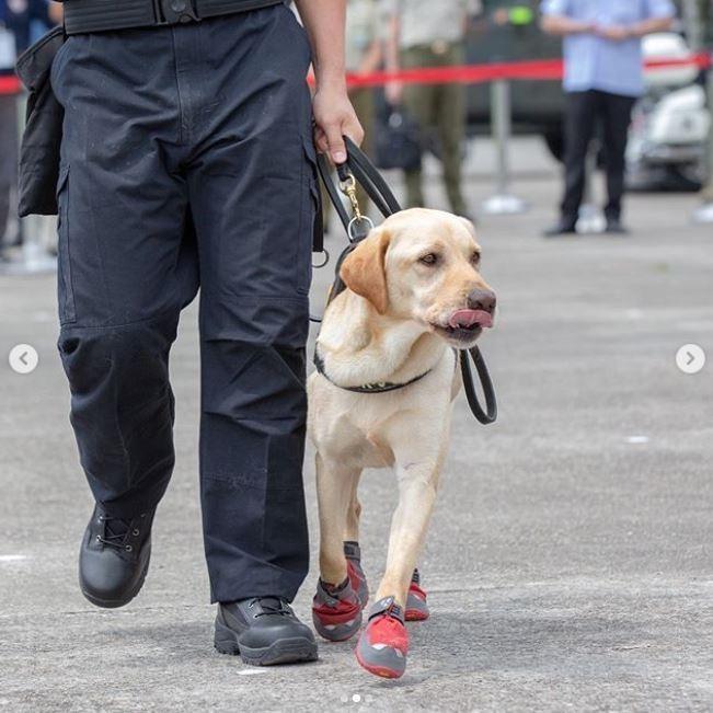蔡英文表示,是為了避免緝毒犬執勤時抓壞事證,才讓牠們穿鞋出任務。(擷取自蔡英文IG)