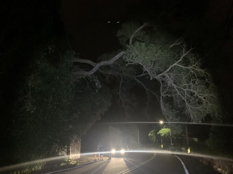 昨深夜一棵巨大路樹倒塌,壓在電線上,路過人車看了膽戰心驚。(記者鄭名翔翻攝)