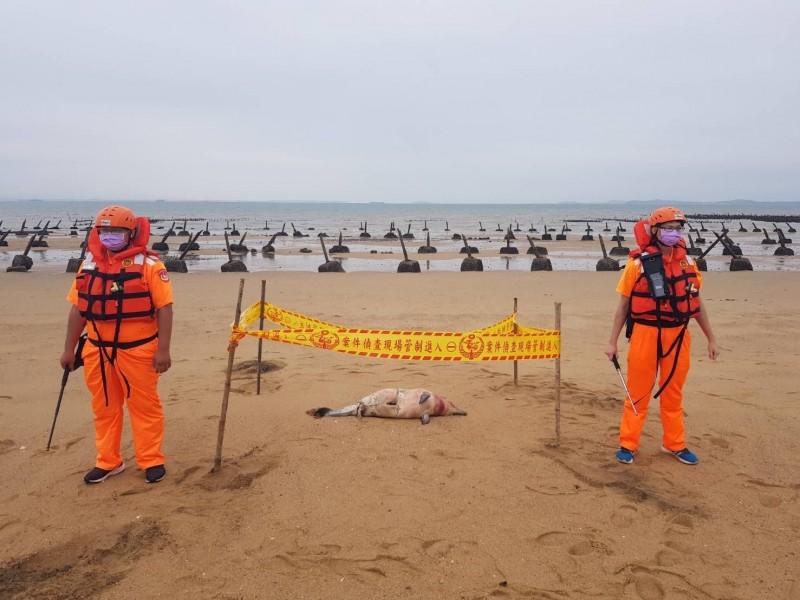 金門岸巡隊在金寧鄉海邊發現死亡鯨豚,現場立刻拉起封鎖線警戒。(圖由金門岸巡隊提供)