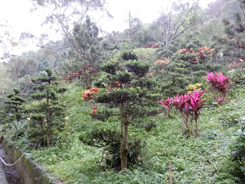 張萬利名下在新店區的這片雜木林地,今天以252萬餘元完成拍定。(行政執行署台北分署提供)