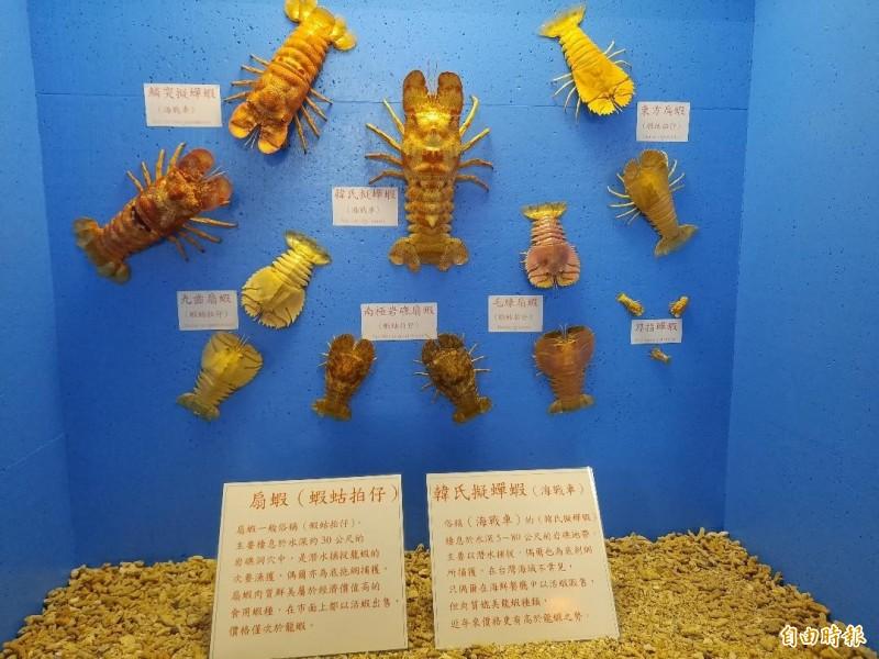 澎湖螃蟹館有專櫃,放置海戰車與蝦蛄拍仔,提供民眾分辨。(記者劉禹慶攝)