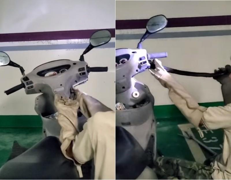 捕蛇大哥配戴防護用具後,先逼眼鏡蛇探出頭來,接著精準的一把抓住蛇頭成功捕獲。(擷取自野生蛇相臉書粉專)