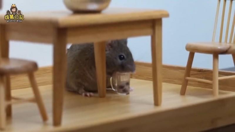 網友自製給倉鼠喝的迷你杯珍奶,可愛模樣讓網友大呼可愛。(圖片由Youtube頻道 VITO維特 授權提供使用)