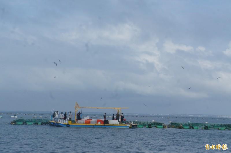 澎湖最夯的新遊程,內海餵魚賞鳥秀廣受歡迎。(記者劉禹慶攝)