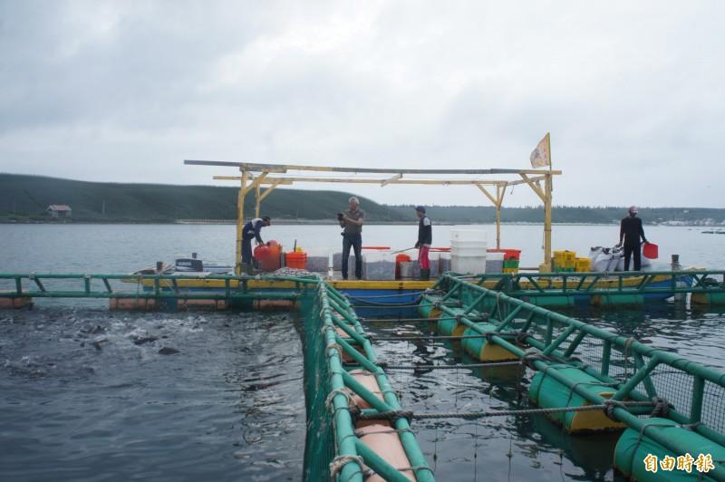 西嶼竹灣箱網養殖區,每日下午都會出動平台船出海餵魚。(記者劉禹慶攝)