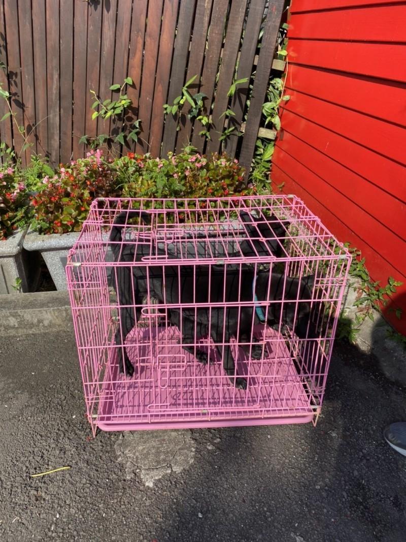 有兩隻黑狗被人棄置在新北市板橋動物之家。(動保處提供)