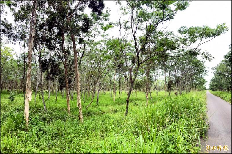 經濟林涵養的豐富生態,讓萬巒地方的綠能發展與生態保育面臨抉擇。(記者邱芷柔攝)