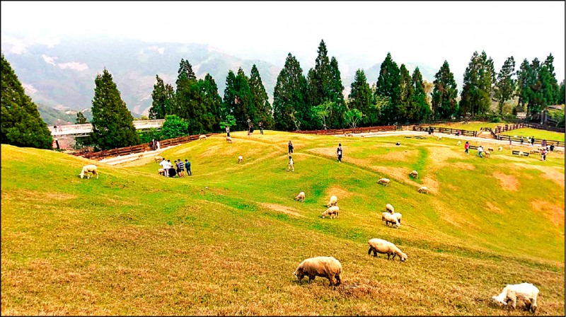 好玩卡的景點中,包括清境農場的青青草原。(清境農場提供)