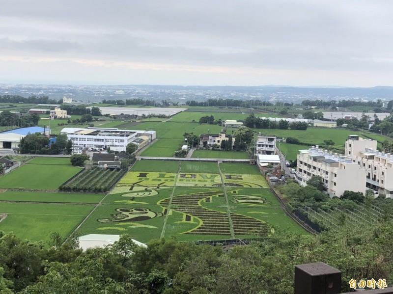 外埔彩繪稻田呈現高美濕地景觀。(記者張軒哲攝)