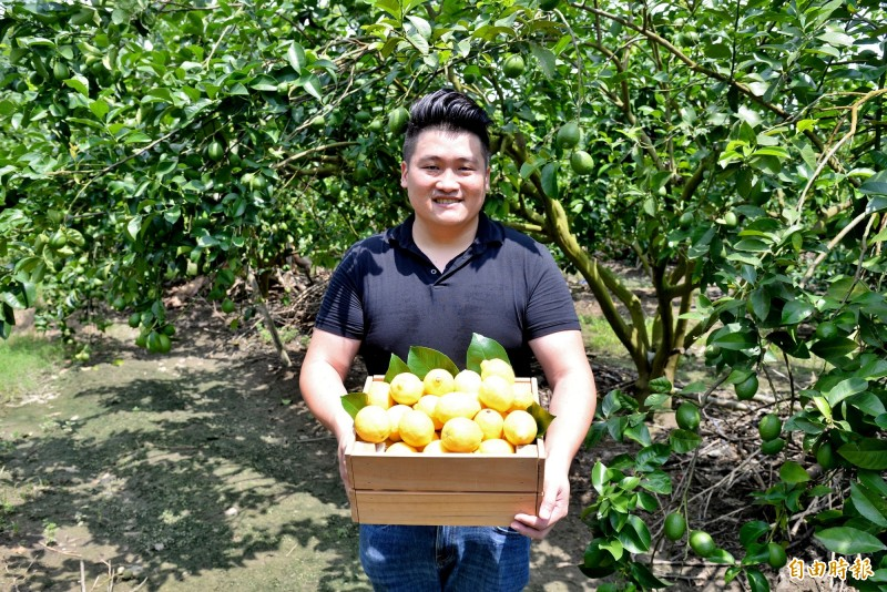 莊承翰把平凡的綠檸檬,變成台灣獨門的黃檸檬。(記者許麗娟攝)