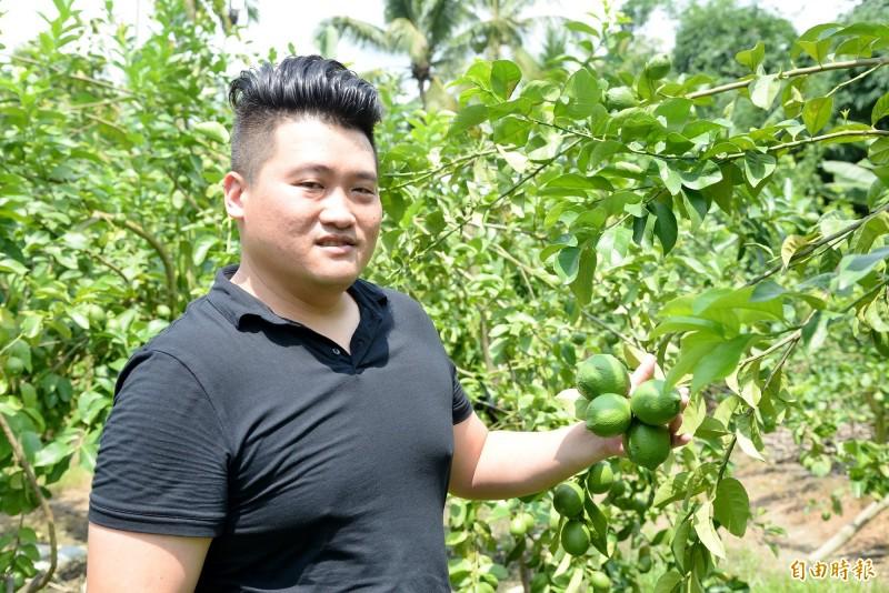 莊承翰說,在旗山蕉滯銷時,阿公很早就引進檸檬種植,後來屏東一帶才廣種。(記者許麗娟攝)