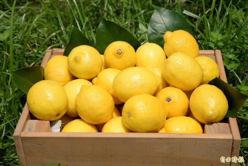 不再只能仰賴進口,台灣也有本土產的新鮮黃檸檬。(記者許麗娟攝)