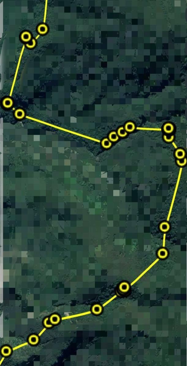 廣原小熊在馬賽克森林的活動範圍擴大,且少在同一地點過夜。(取自台東林管處臉書)