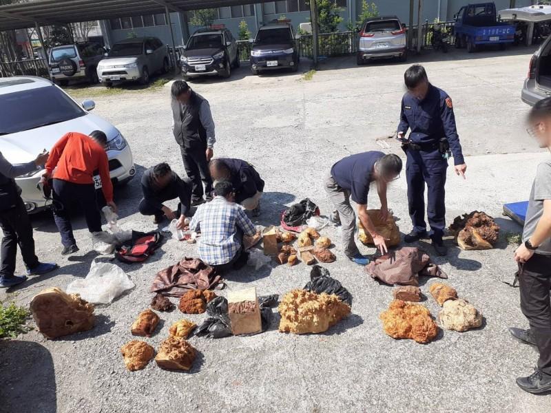 5名越籍移工搬運台灣扁柏和紅檜樹瘤下山,被埋伏警員和林務人員逮到,南投地院法院依其木瘤價值,判5人併科罰金每人近2000萬元。(南投林管處提供)
