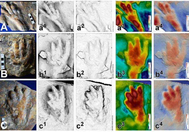 在南韓發現的一道足跡化石顯示,距今約1億年前的白堊紀前期可能存在用兩條腿行走的鱷魚。(圖擷自Scientific Reports)