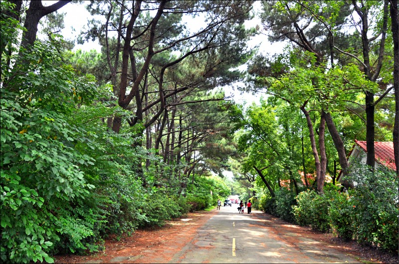 大湳森林公園第一期景觀工程預計明年六月完工開放。(記者周敏鴻攝)