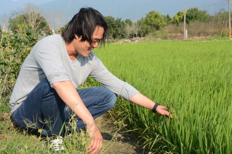 魏瑞廷與奧丁丁集團合作,將區塊鏈導入傳統稻米產業,打造自有品牌「池上禾穀坊-米之谷」,聲名遠播梵蒂岡。(記者陳賢義翻攝)