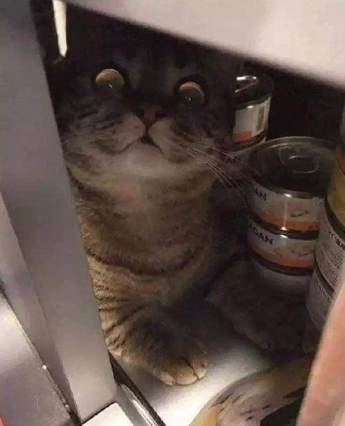 原PO貼出藏在放滿罐罐櫃子裡的喵星人被奴才發現的照片。(圖擷自爆笑2公社)