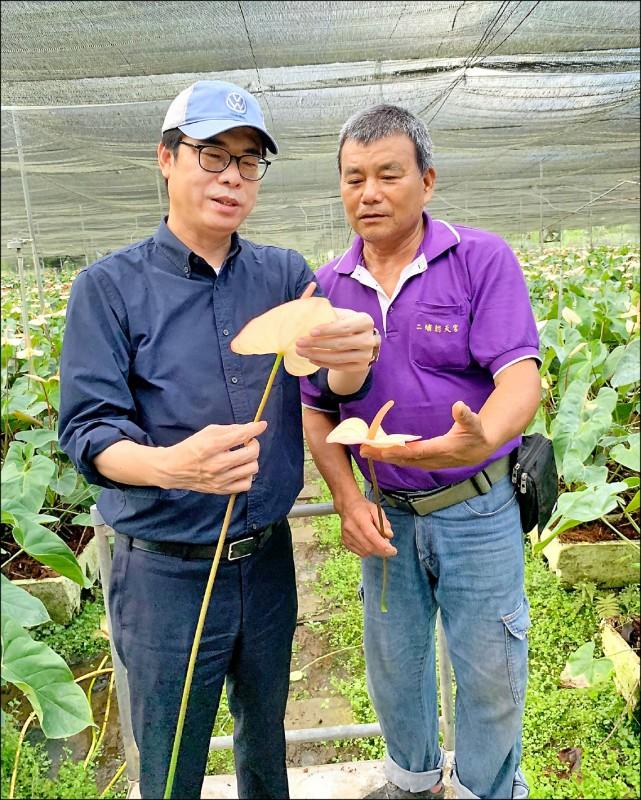 行政院副院長陳其邁昨走訪高雄內門,關切火鶴花產銷價格及生產狀況。(圖取自陳其邁臉書)