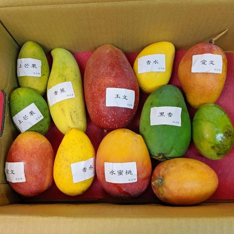 近來有網友在網路上分享她網購台灣在地小農的「芒果珠寶盒」,貼文一出後迅速引起熱議,更被日本網友轉傳分享,不但打開了台灣在地芒果的能見度,也讓各界看見了台灣農業技術的精良。(網友Joyce Huang授權提供)