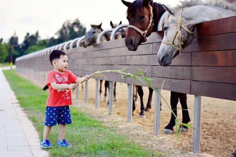動物餵食是金門「親子嘉年華」體驗項目之一。(圖:金門縣政府提供)