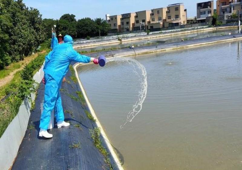 新竹縣一處澳洲螯蝦養殖場感染「十足目虹彩病毒」,全場銷毀掩埋。(新竹縣家畜疾病防治所提供)