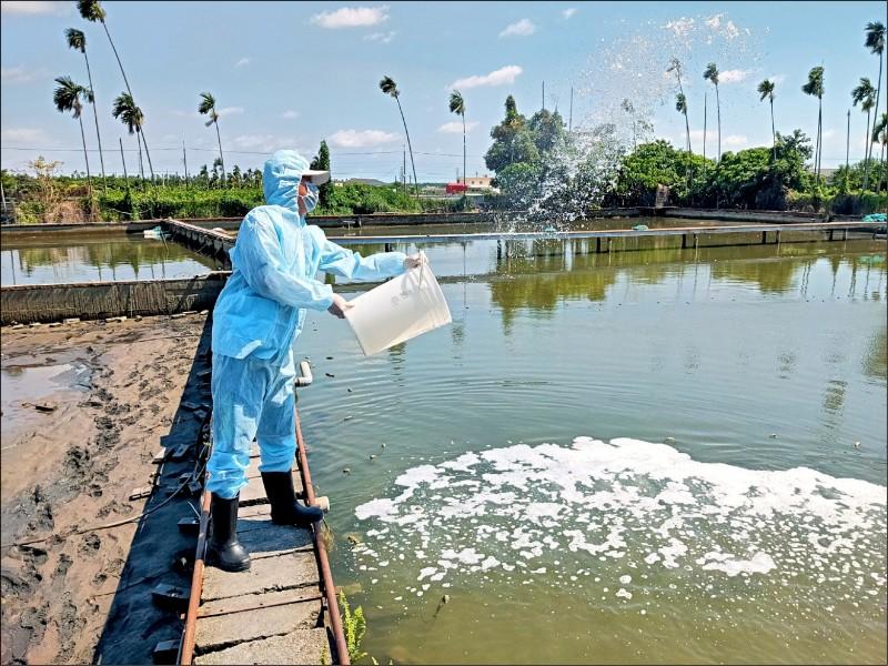 螯蝦清除後,池內潑灑消毒水。(屏東縣政府提供)