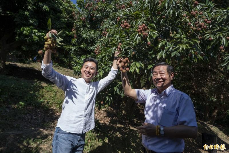 端午連假前竹市荔枝節開跑,市長林智堅(左)帶路果園鮮採荔枝!(記者蔡彰盛翻攝)