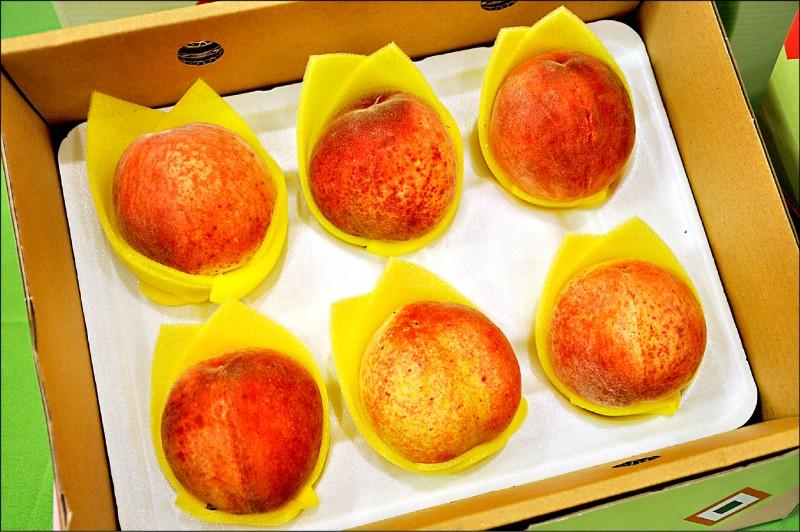 復興區農會開放民眾預訂拉拉山水蜜桃。(記者周敏鴻攝)