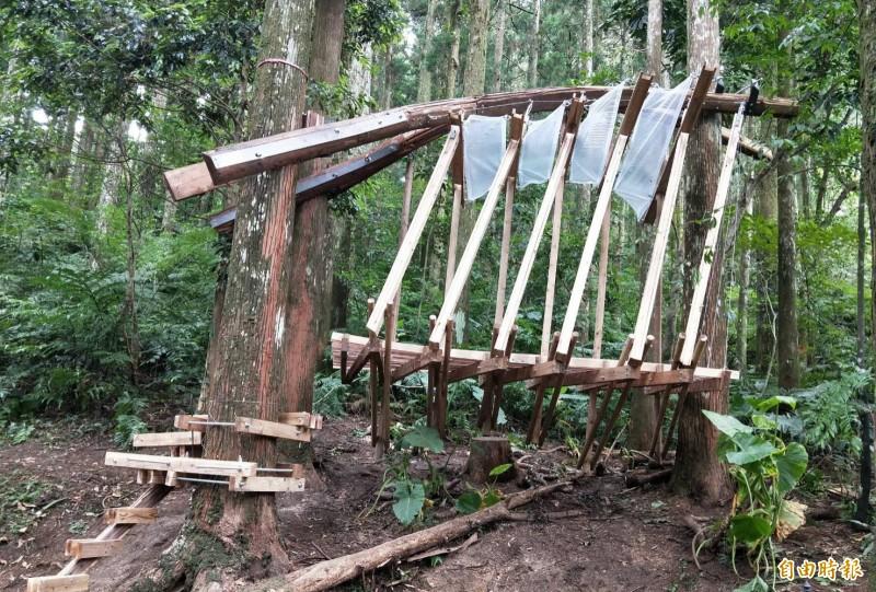 淡江大學建築系「森林木十人」團隊在東眼山國家森林遊樂區所創作的「懸森」作品。(記者李容萍攝)