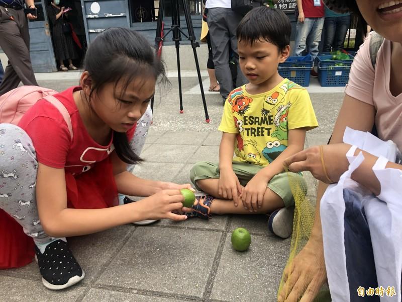 大人小孩開心立檸檬。(記者羅欣貞攝)