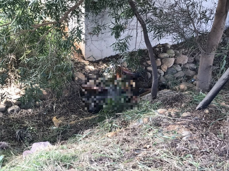 民眾報案五楊高架下的草叢有人.,警、消到場見發黑屍體。(記者李容萍翻攝)