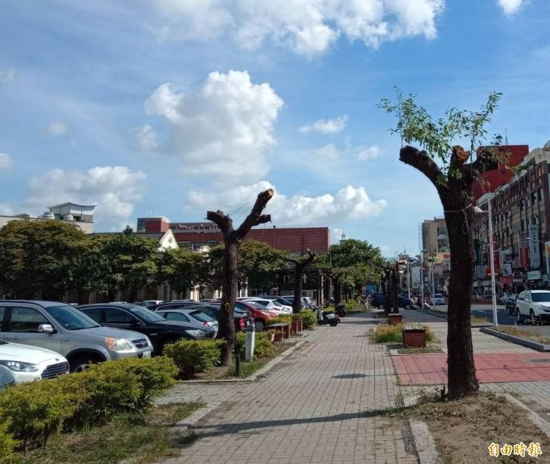 10多棵樟樹修剪時直接被「斷頭」。(記者林良哲攝)