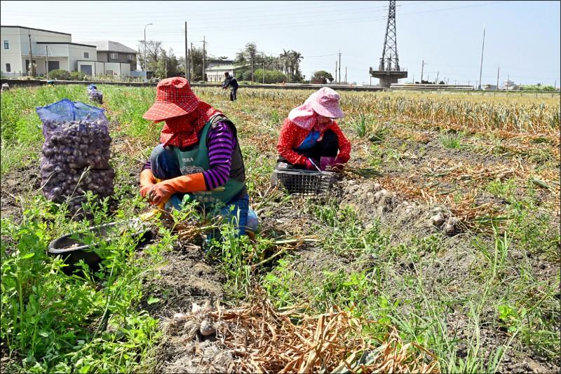 農業缺工嚴重。(資料照)