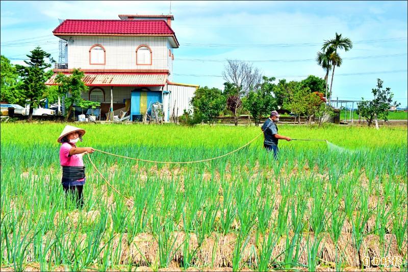 宜蘭縣農會招募農師傅、農耕士,最高每月薪資可達4萬5千元,除解決農業缺工,也盼增加青年從農意願。(資料照,記者張議晨攝)